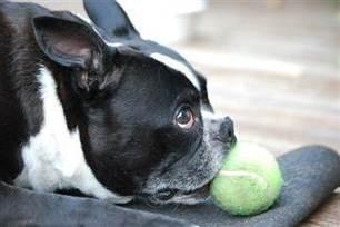 Jerky treat mystery: Nearly 600 pets dead; still no source, FDA says - NBC News.com | Feline Health and News - manhattancats.com | Scoop.it