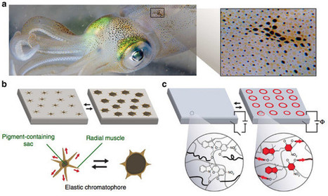 A Stretchable, Light-Up Surface Inspired by Squid Skin | WIRED | Knowmads, Infocology of the future | Scoop.it
