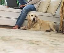 Best option of carpet cleaning strategy for feasible | douglasvharmon's Mobile Blog | Carpet cleaning redmond | Scoop.it