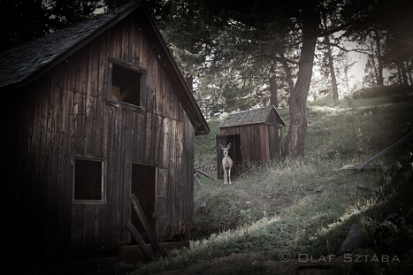 Montana's Ghost Towns with the Fuji X-series | Olaf & Kasia Sztaba | Fuji X-Pro1 | Scoop.it