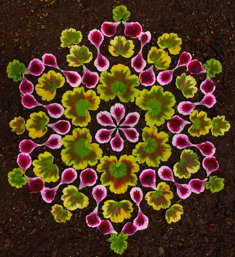 Colourful Mandalas made out of plants #art #mandalas #colour #nature  #plants | Art-Arte-Cultura | Scoop.it