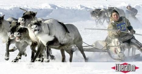 Sibérie : des rennes décimés par une épidémie d'anthrax, toute une région en quarantaine | Veille | Scoop.it