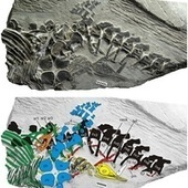 Live Birth Reptile Fossil Pre-Dates Current Record By 10 Million years | Geology | Scoop.it