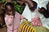 Rwanda Releases Iron-Rich Beans to Improve Public Health for Millions | HarvestPlus | Plant Breeding and Genetics | Scoop.it