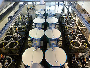 Water recirculating system offers new boost to aquaculture - FIS | Aquaculture | Scoop.it