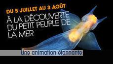 Océanopolis| Aquarium de Brest et parc de loisirs en Finistère-Bretagne | Tourisme en Bretagne Sud | Scoop.it