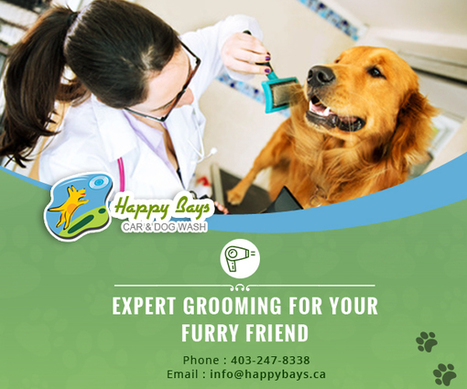 Expert Grooming for your Furry Friend | Know about Your Car Wash Services in Calgary from Happy Bays | Scoop.it