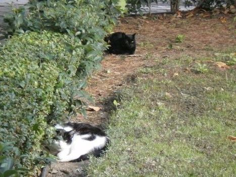 Condenado el Ayuntamiento de Madrid por imponer sanción injusta a cuidadores de gatos | Mascotas | Scoop.it