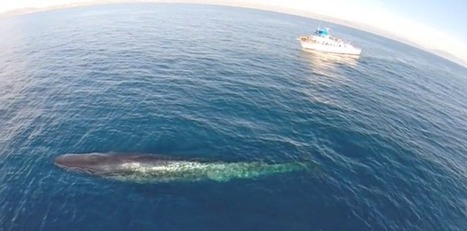 Drone Whale Watching: Do Unmanned Aircraft Harm Marine Mammals? [VIDEO] - International Business Times | Space Weather | Scoop.it