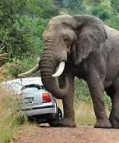 Elephant attacks British tourist in Kruger National Park South Africa ... | Practice | Scoop.it