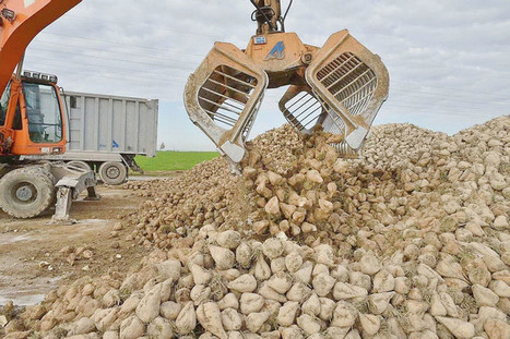 Comment les géants du sucre se préparent à la fin des quotas - La Croix   Le Fil @gricole   Scoop.it
