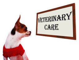 Problems with Conventional Veterinary Methods There are many issues regarding conventional veterinary education and practice.  Vets who practice integrative medicine not only have the conventional ... | Dogs | Scoop.it