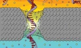 Penn Research Makes Advance in Nanotech Gene Sequencing Technique | SynBioFromLeukipposInstitute | Scoop.it