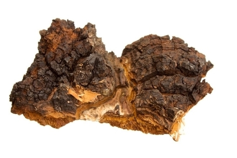 Echoez Of Health Recommends: Chaga: The Cancer Healer and King of All Herbs | Echoez Of Health | Scoop.it