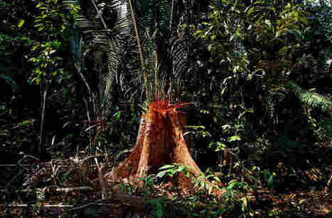 Deforestation Of The Amazon Up 29 Percent From Last Year, Study Finds | Lorraine's Sustainable Biomes (NSW) (including Food security) | Scoop.it