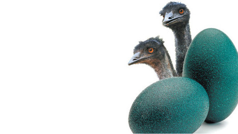 India's Emu Ranching Bubble Bursts, With a Grim Aftermath | Market Research | Scoop.it