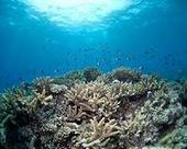 Reefs cheaper than concrete to protect coast cities | Sustain Our Earth | Scoop.it