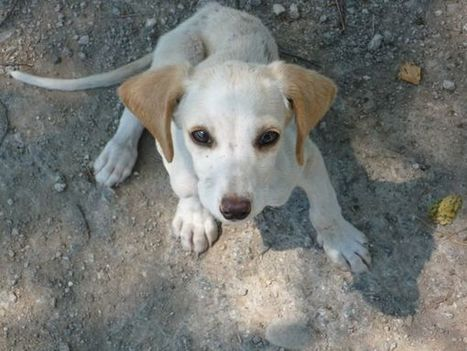 Illegale Hunde-Importe können teuer zu stehen kommen | ʕ·͡ᴥ·ʔ Welpenkauf Informationen | Scoop.it
