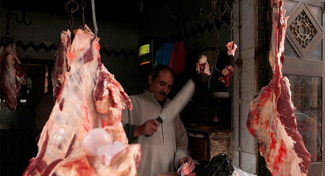 Can new food safety law stop Egypt's 'donkey slaughter mafia'? | CIHEAM Press Review | Scoop.it