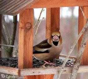 En hiver le spectacle est aux mangeoires, mais des becs et des plumes sont aux abonnés absents | pour mon jardin | Scoop.it