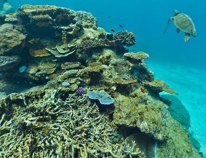 Preserving the World's Reefs Through Photography | Sustainable Futures | Scoop.it