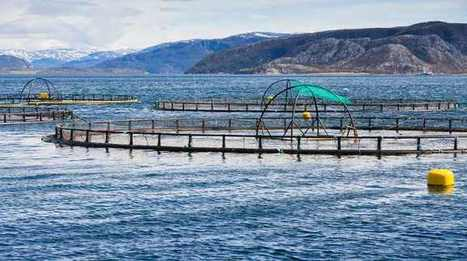 How Fish Farms Destroy the Ecosystem and Threaten Your Health | Nova Scotia Fishing | Scoop.it