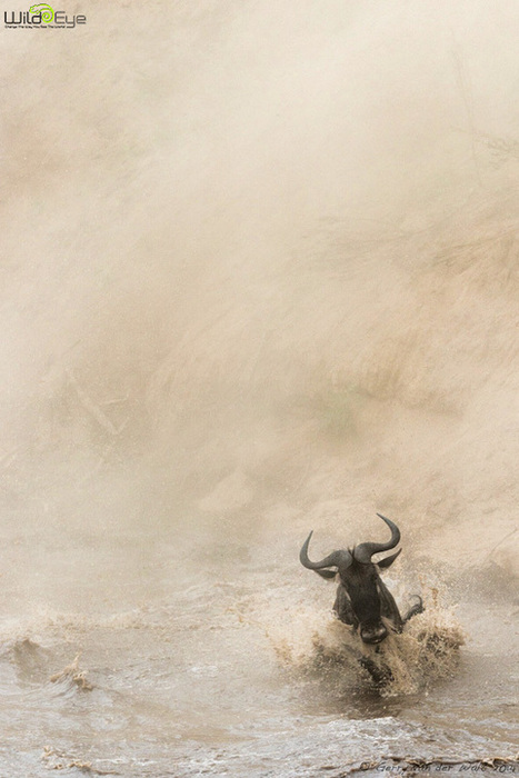 100 Amazing Images from the Mara, The 2014 Edition - Wild Eye Photography | webdesign | Scoop.it