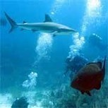 IUCN - Marine Protected Areas   Marine Protected Area   Scoop.it