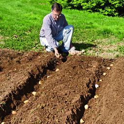 Planting Potatoes: 7 Different Methods: Organic Gardening | Modern-Day Homesteader | Scoop.it
