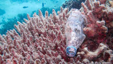 Documental Océanos de plástico, La noche temática - RTVE.es A la Carta | Contaminación en Oceanos | Scoop.it