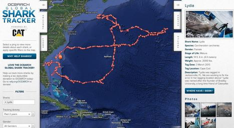 Shark Tracker | Geography Education | Scoop.it