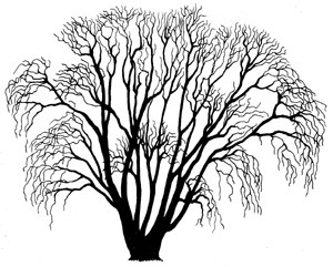Life Choices: The Decision Tree | CoachStation | Interesting | Scoop.it