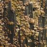 Lichen systematics