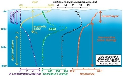 The Biological Productivity of the Ocean | Learn Science at Scitable | Deep Ocean Biome | Scoop.it