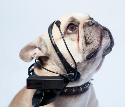 Un casque qui lit les pensées des chiens | Quantified Self and Internet of Things | Scoop.it