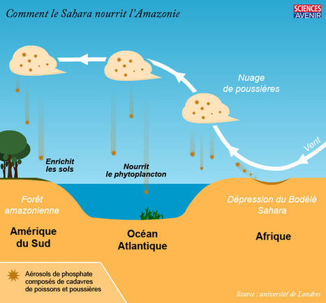 Comment le Sahara nourrit l'Amazonie | Actu, moto & politique | Scoop.it