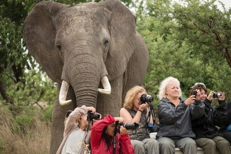Giant Elephant Photobombs Oblivious Tourists in Africa | Spray The News | Scoop.it