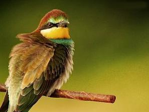 Mise en ligne des données de l'Atlas des Oiseaux de France Métropolitaine | Biodiversité & Relations Homme - Nature - Environnement : Un Scoop.it du Muséum de Toulouse | Scoop.it