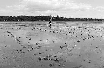 Archeology student publishes paper on ancient, industrial-scale First Nations fishery | Archivance - Miscellanées | Scoop.it