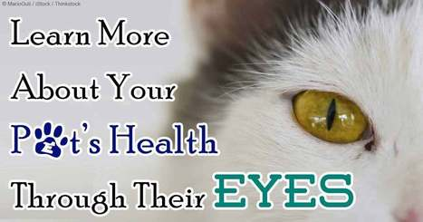 Ocular Signs May Signal Serious Type of Disease | Pet Health | Scoop.it