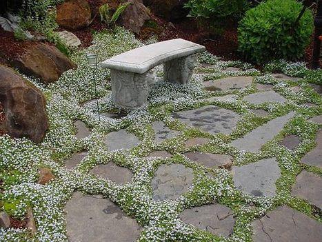 20 Plants for garden pathways | Gardening Life | Scoop.it