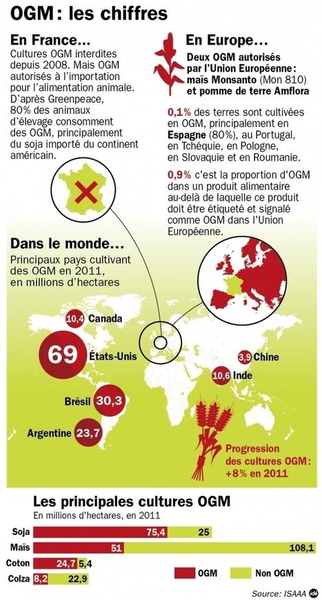 OGM : l'étude Séralini officiellement rejetée - Information - France Culture   Abeilles, intoxications et informations   Scoop.it