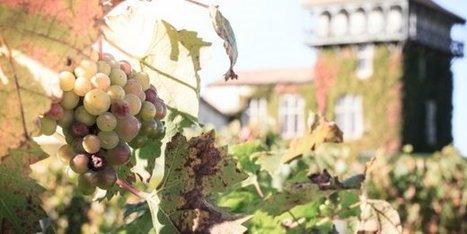 Les 6 Routes du vin de Bordeaux en Gironde sont lancées | Revue de presse Pays Médoc | Scoop.it