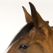 Equine Senses and How They Relate to Behavior   The Natural Horse   Scoop.it