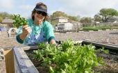 Master Gardeners help Texas community garden grow | Community Gardening Resources | Scoop.it