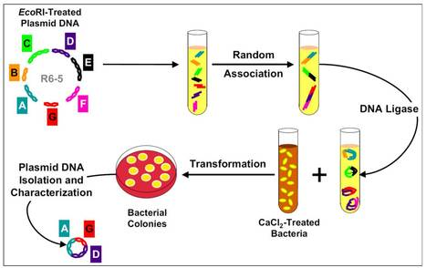 PNAS: DNA cloning: A personal view after 40 years by Stanley Cohen | Marisa | Scoop.it