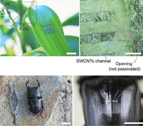 Flexible all-carbon electronics can be integrated onto plants, insects, and more | Amazing Science | Scoop.it