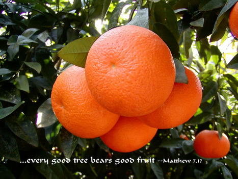 Matthew 7.17 Poster - ...every good tree bears good fruit. | Resources for Catholic Faith Education | Scoop.it