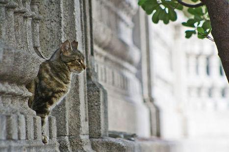 ¿Y si envenenaran a Teodoro, el gato de Cortázar? | Mascotas | Scoop.it