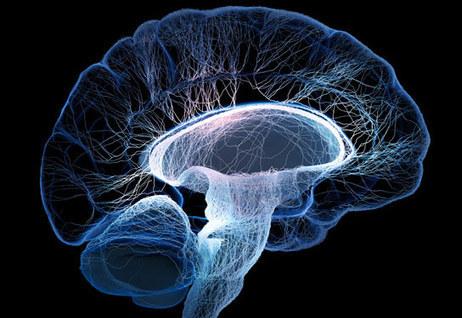 Gene Linking Brain Structure to Intelligence Identified | BrainLovers | Scoop.it